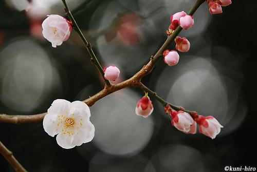 0223_090308_kyotogyoen_280