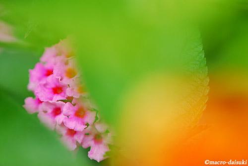 110925_kyoto_337b