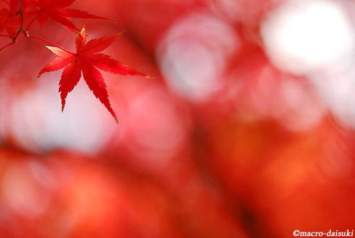 1128_101127_tsurumi_001