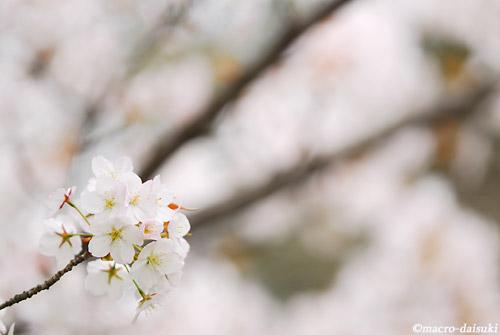 0422_120415_kyoto_020