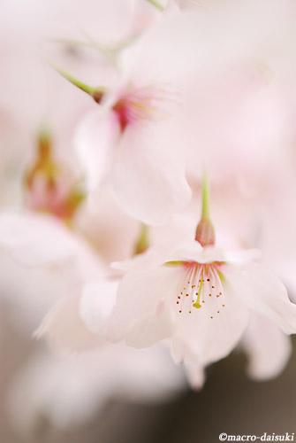0425_120415_kyoto_227