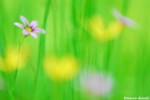 0510_120503_wakayama_135