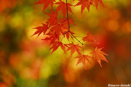 1120_121118_katsuouji_008