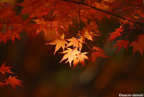 1128_121118_katsuouji_046
