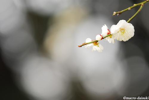 0226_110306_kyoto_152