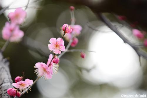 0312_140302_gyoen_362