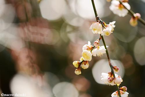 140315_kyoto_260