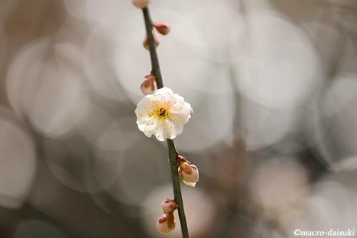 140315_kyoto_139_